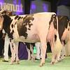 SwissExpo2017_Holstein_IMG_9647