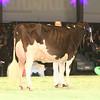 SwissExpo2017_Holstein_IMG_9742