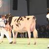 SwissExpo2017_Holstein_IMG_9635
