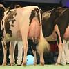 SwissExpo2017_Holstein_L32A1148