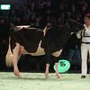 SwissExpo2017_Holstein_L32A0872