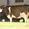 SwissExpo2017_Holstein_IMG_9756