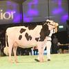 SwissExpo2017_Holstein_IMG_9512