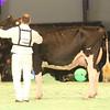 SwissExpo2017_Holstein_IMG_9757