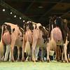 SwissExpo2017_Holstein_L32A1376