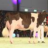 SwissExpo2017_Holstein_IMG_9968