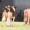 SwissExpo2017_Holstein_IMG_9519