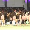 SwissExpo2017_Holstein_IMG_9711