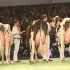 SwissExpo2017_Holstein_IMG_9889