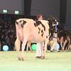 SwissExpo2017_Holstein_IMG_9617