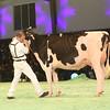 SwissExpo2017_Holstein_IMG_9633