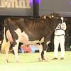 SwissExpo2017_Holstein_IMG_9750