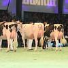 SwissExpo2017_Holstein_L32A1033