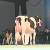 SwissExpo2017_Holstein_L32A1052