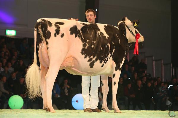 SwissExpo2017_Holstein_L32A1109