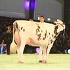 SwissExpo2017_Holstein_IMG_9906