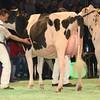 SwissExpo2017_Holstein_L32A1030