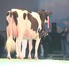 SwissExpo2017_Holstein_IMG_9508