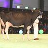 SwissExpo2017_Holstein_IMG_9661