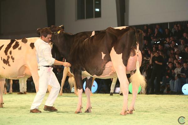 SwissExpo2017_Holstein_IMG_9644