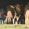 SwissExpo2017_Holstein_L32A1219