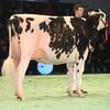 SwissExpo2017_Holstein_L32A1116
