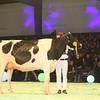 SwissExpo2017_Holstein_IMG_9663