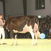 SwissExpo2017_Holstein_IMG_9761