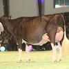 SwissExpo2017_Holstein_KIMG_0027