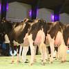 SwissExpo2017_Holstein_IMG_9696