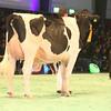 SwissExpo2017_Holstein_IMG_9680