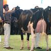 SwissExpo2017_Holstein_L32A1205