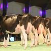 SwissExpo2017_Holstein_IMG_9702