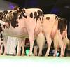SwissExpo2017_Holstein_IMG_9569