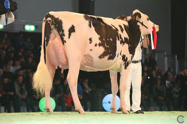 SwissExpo2017_Holstein_L32A1169