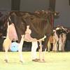 SwissExpo2017_Holstein_IMG_9744