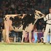 SwissExpo2017_Holstein_L32A1068