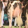 SwissExpo2017_Holstein_IMG_9887