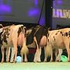 SwissExpo2017_Holstein_L32A1146