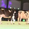 SwissExpo2017_Holstein_IMG_9621