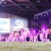 SwissExpo2017_Holstein_L32A1323