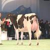 SwissExpo2017_Holstein_IMG_9539