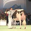 SwissExpo2017_Holstein_IMG_9526