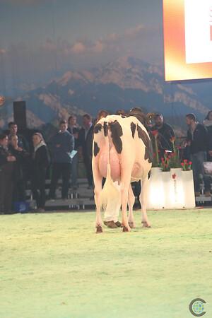 SwissExpo2017_Holstein_L32A1056