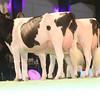 SwissExpo2017_Holstein_IMG_9775