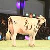 SwissExpo2017_Holstein_IMG_9905