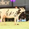 SwissExpo2017_Holstein_IMG_9900