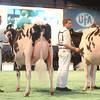 SwissExpo2017_Holstein_IMG_9540