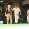 SwissExpo2017_Holstein_L32A1157