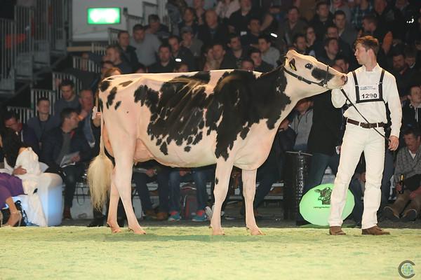 SwissExpo2017_Holstein_L32A1069